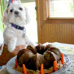 Moments With Molly – Happy Birthday Miss Molly