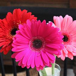 A Belated Birthday Gift – Blogtoberfest Day 28