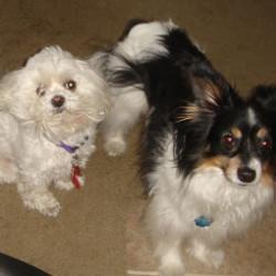 Our four-legged kids