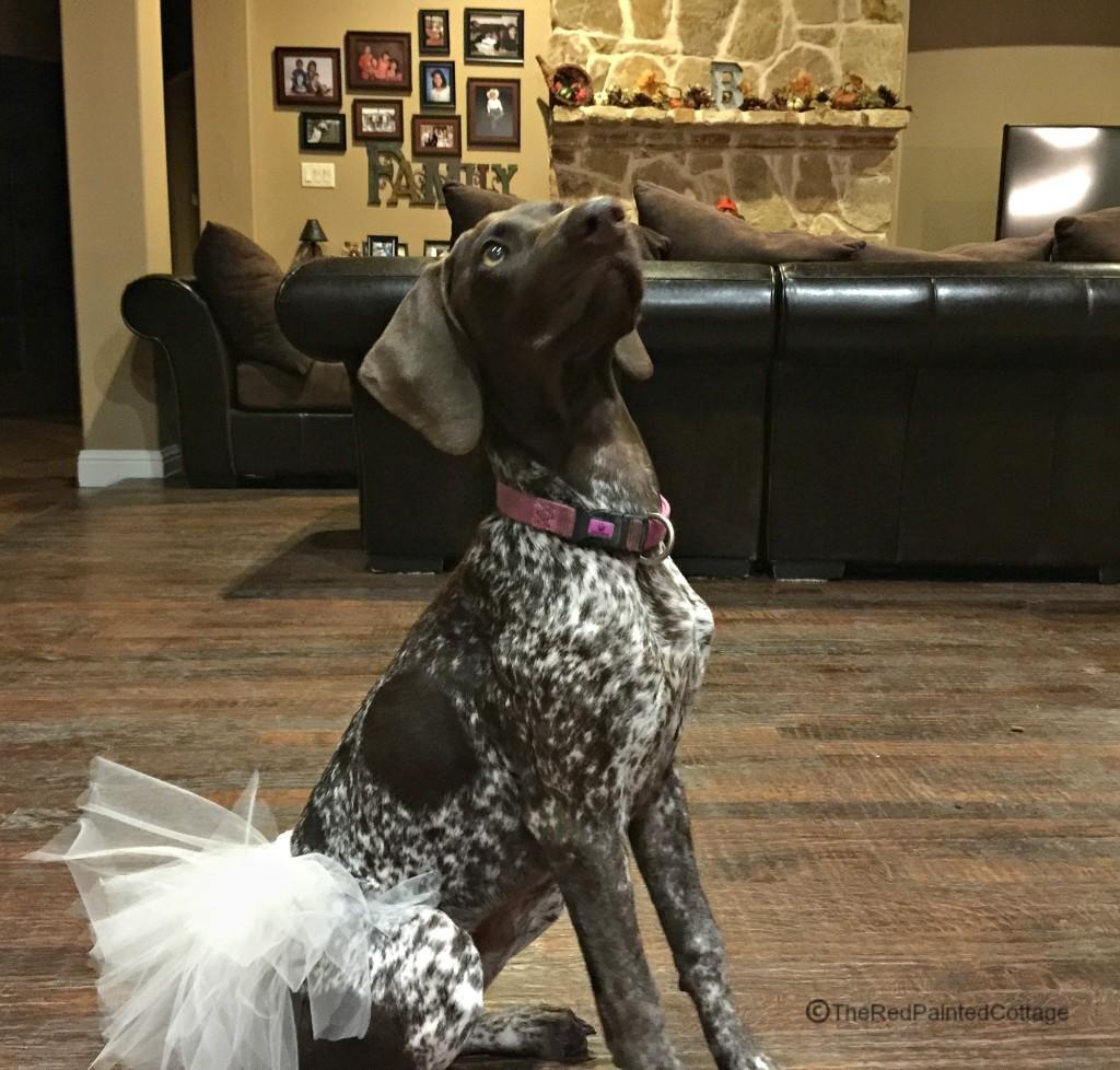 Molly Halloween2