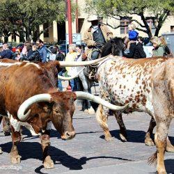 Cowboys and Longhorn