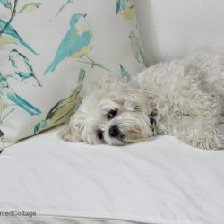 Moments With Molly – White Slipcovers and Being Lazy