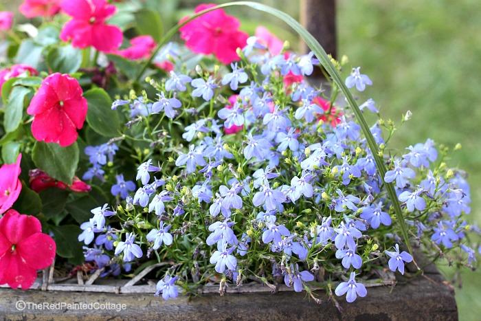 cottage flowers2