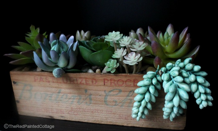 Succulent Obsession-The Red Painted Cottage
