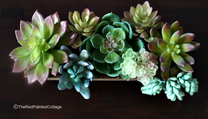 Succulent Obsessions