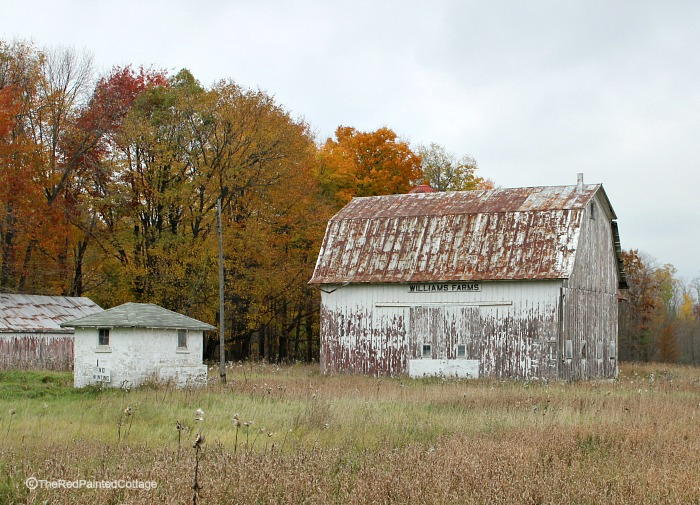 White barn in the fall - The Red Painted Cottage