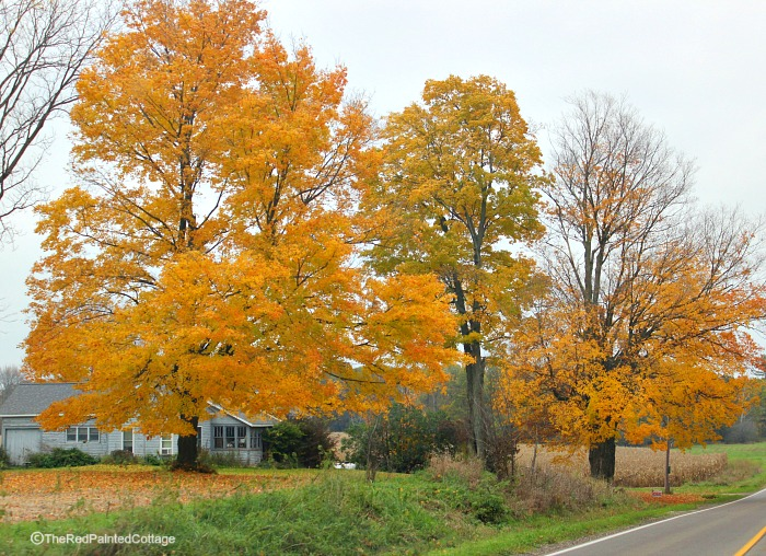 Autumn in Michigan -The Red Painted Cottage
