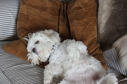 Moments with Molly – Settling in at the Cottage