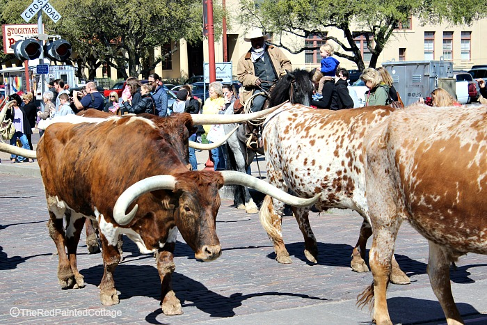 Cowboys and Longhorn