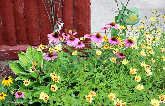cottage flowers12