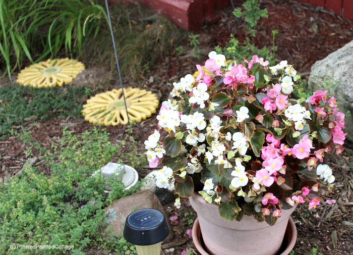 cottage flowers15