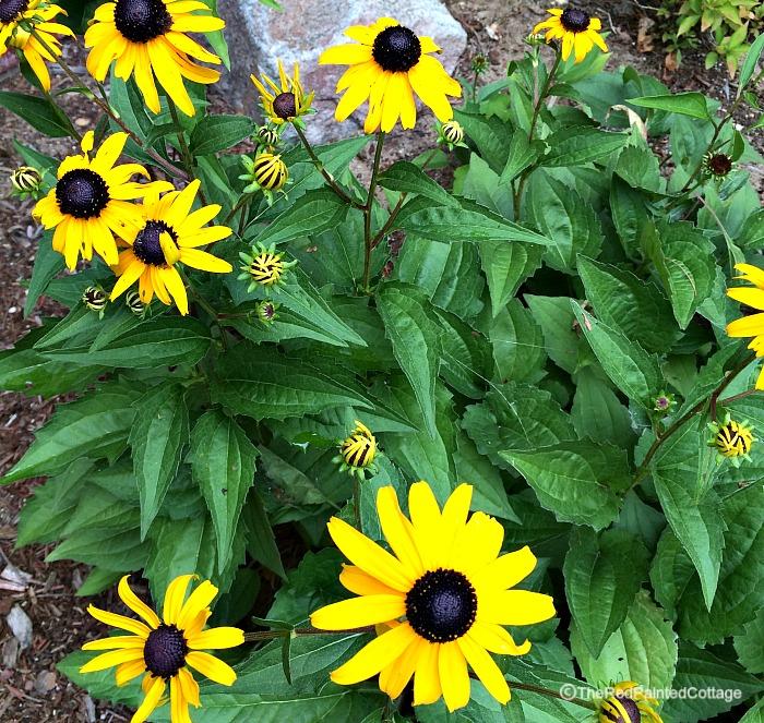 cottageflowers1