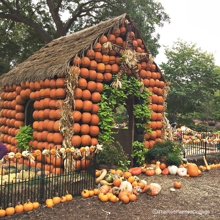 pumpkin-village5
