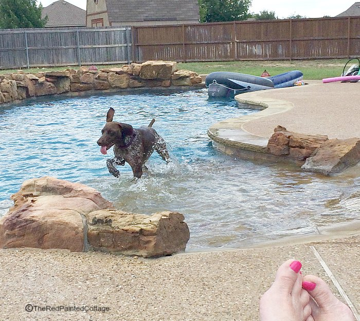 How Our Texan Grand Dogs Spend Their Summer