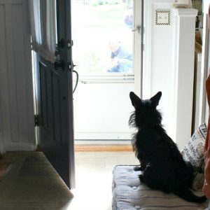 Stories With Sadie – A Mix Of Breeds