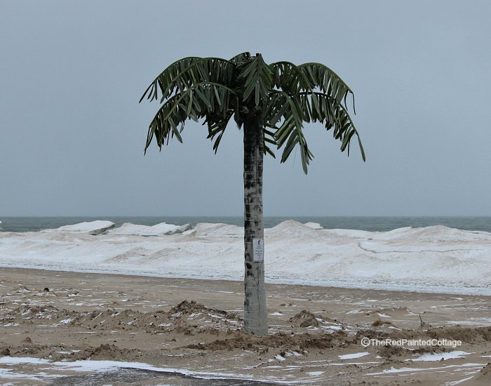 palm tree on icy beach