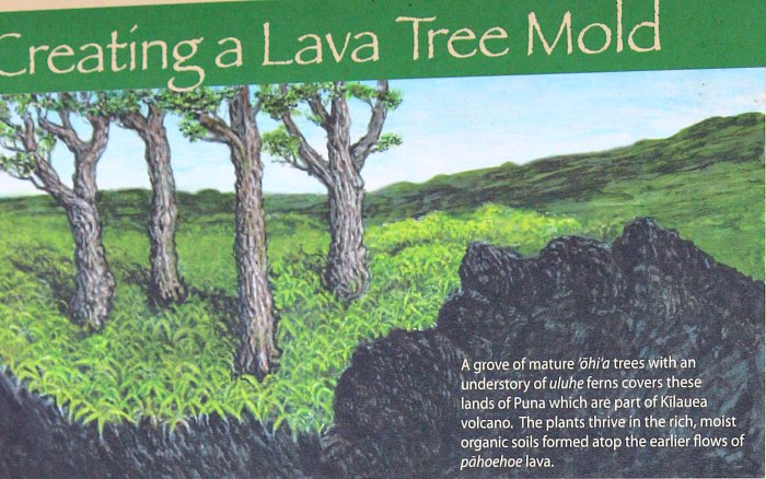 Lava tree sign