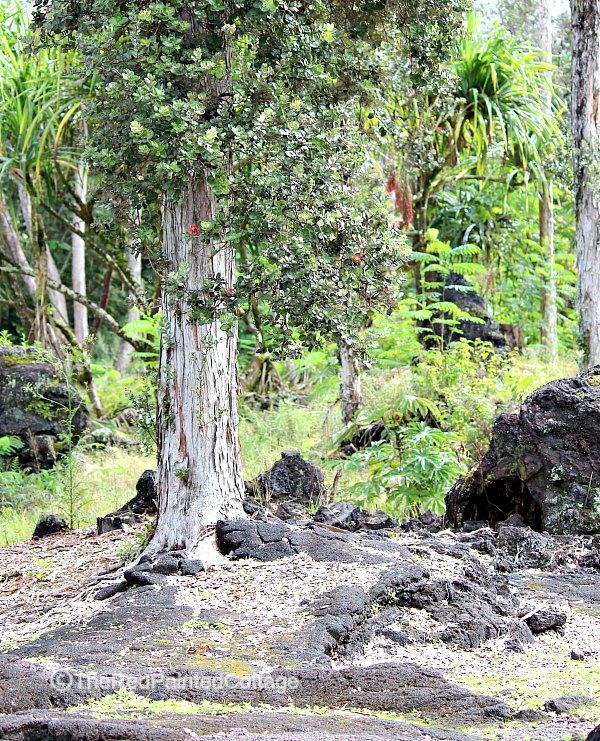 Lave tree park