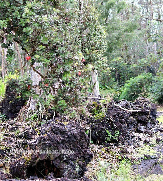 Lava tree park