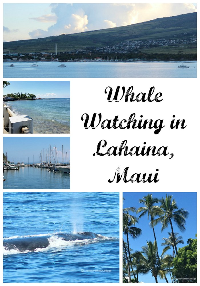 Whale Watching In Lahaina, Maui collage