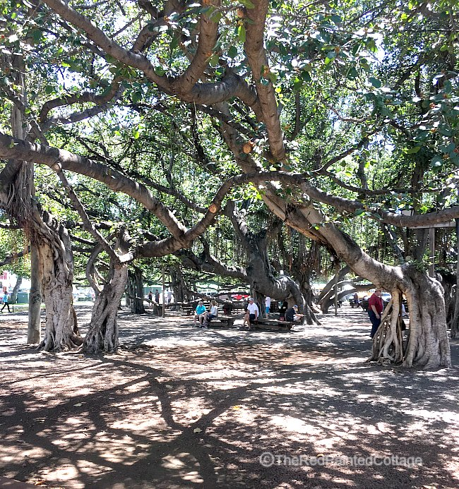 Banyon tree park