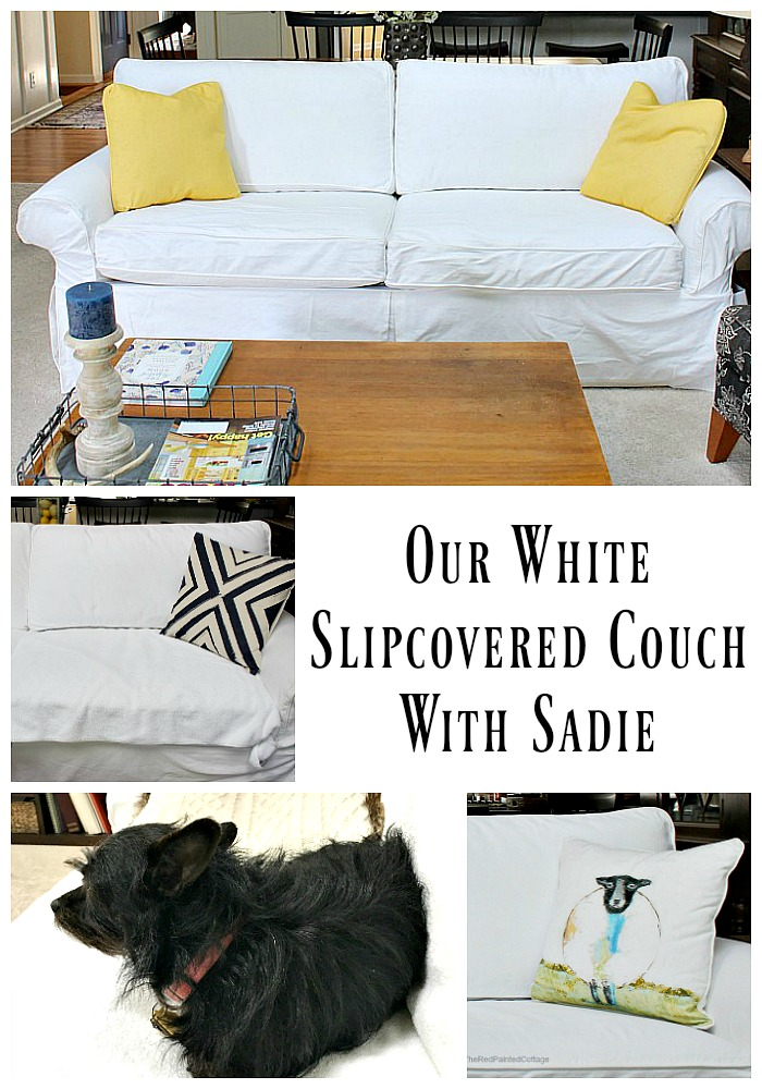 Our White Slipcovered Couch With Sadie