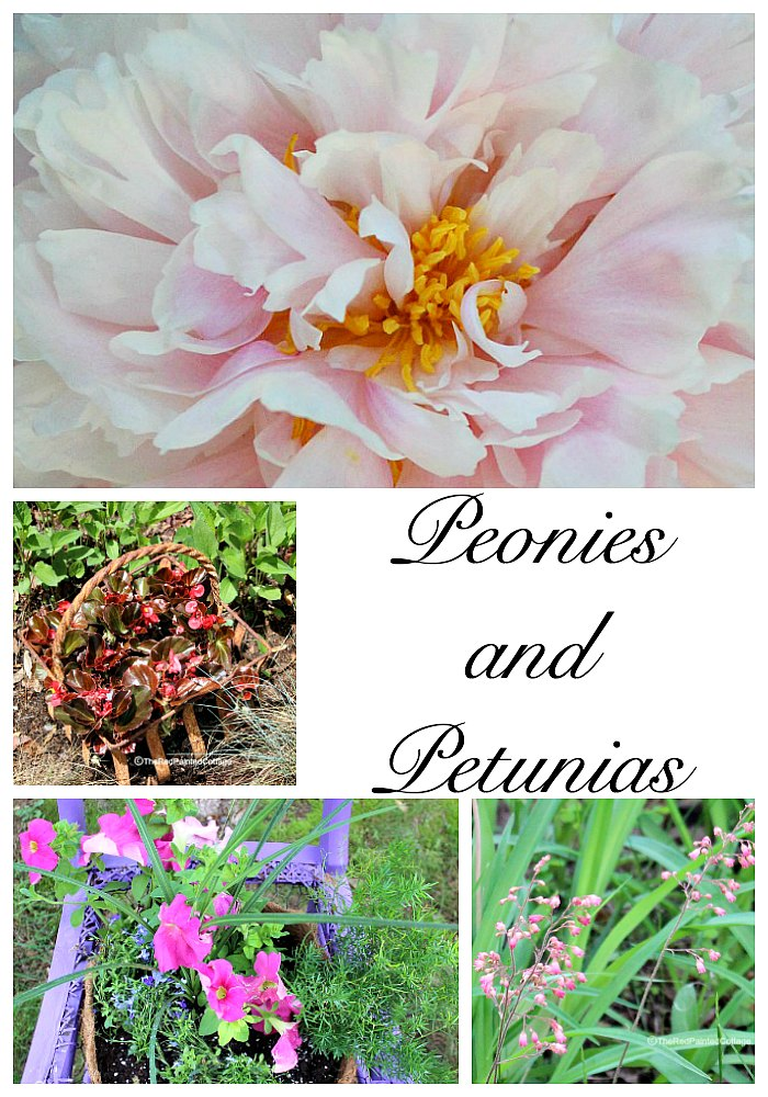 Peonies And Petunias In The Garden collage